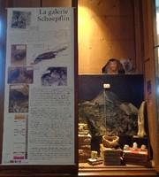 test_musee-vitrine-II_galerie-schoepflin_ballinger.jpg
