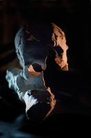 Crâne 3 · Artemyz, Claire · © Claire Artemyz