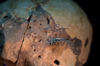 Crâne : détail · Artemyz, Claire · © Claire Artemyz
