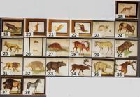 21 aquarelles pour illustrer les Grottes d'Arcy : représentation des animaux préhistoriques · Poitreau, Léon Auguste
