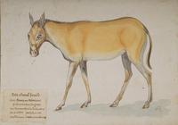 Petit cheval fossile, âne, poney ou hémione · Poitreau, Léon Auguste
