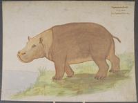 Hippopotame fossile · Poitreau, Léon Auguste