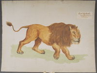 Lion-tigre fossile · Poitreau, Léon Auguste