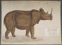 Rhinocéros fossile · Poitreau, Léon Auguste